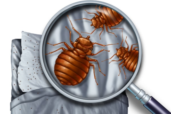 Bed bugs can be difficult to find - DSY Pest control services