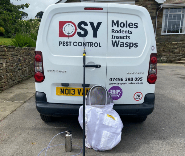 Wasp Nest removal Chesterfield - Derbyshire and South Yorkshire Pest Control Services