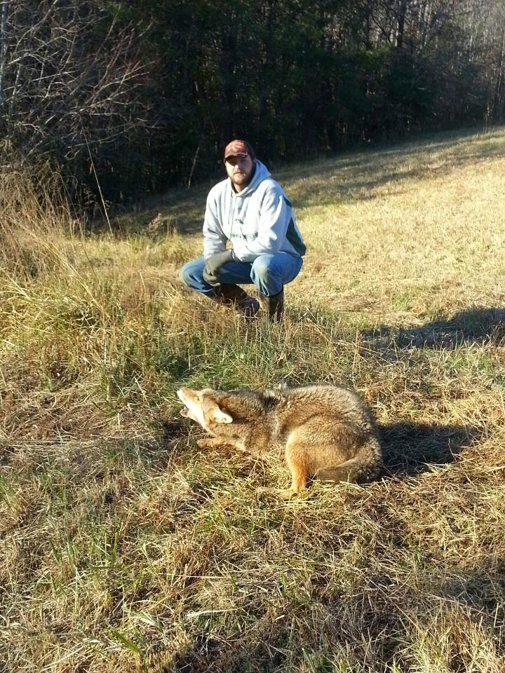 coyote-removal