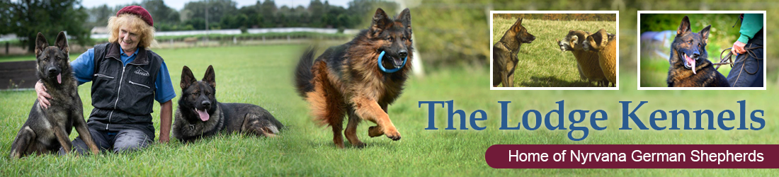 The Lodge Kennels - Home of Nyrvana Working Line German Shepherd Dogs