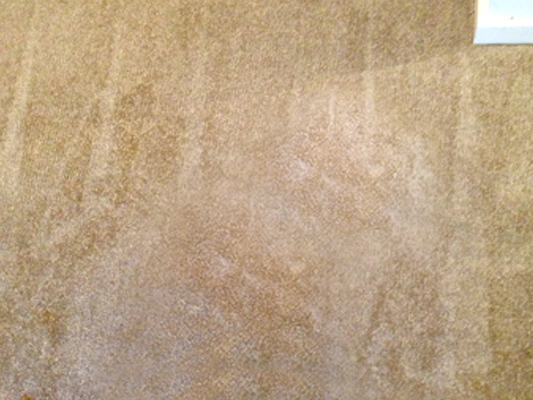 Ink Stains Caused By Dog, Carpet Repairs Sydney