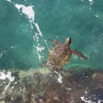 Thousands of Sea Turtles Rescued in Texas