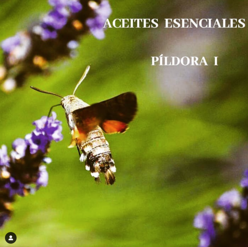 Aceites Esenciales Pildora 1