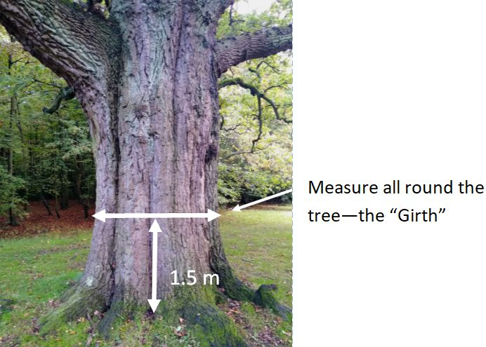 A close up of a tree  Description automatically generated