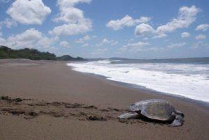 Playgrounds Surf Camp Nicaragua Turtle