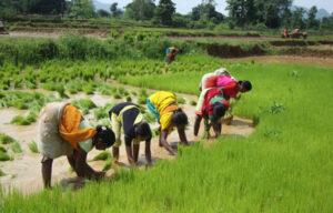 odisha farming