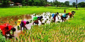 Odisha Agriculture