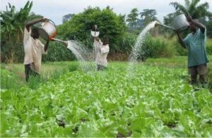 water use in agriculture