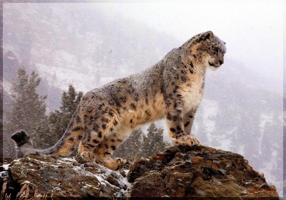 Chitral-Gol-National-Park