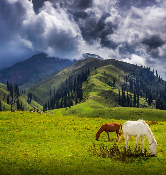 Siripaye meadows