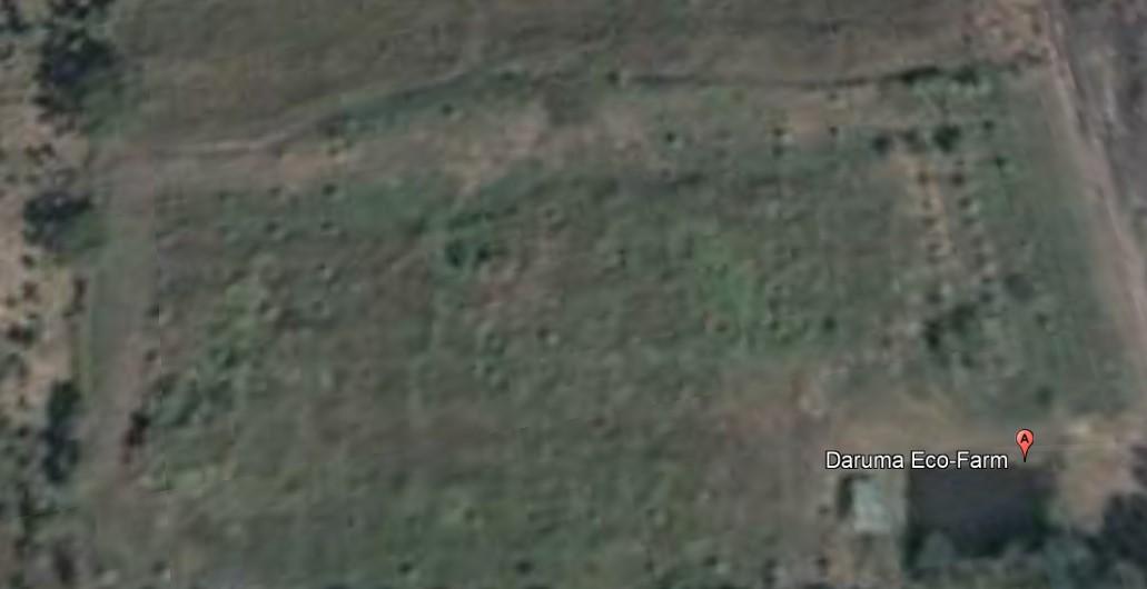 Daruma Eco-Farm Way Back When