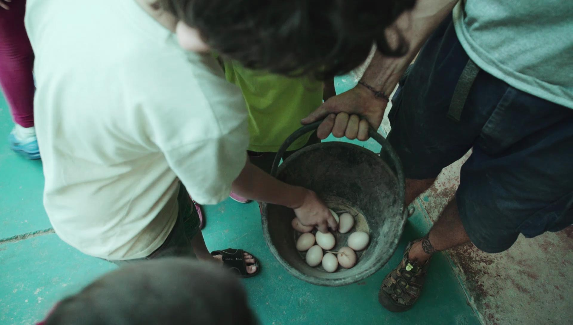 Magical Alchemy. Turning food waste into eggs, with chickens!