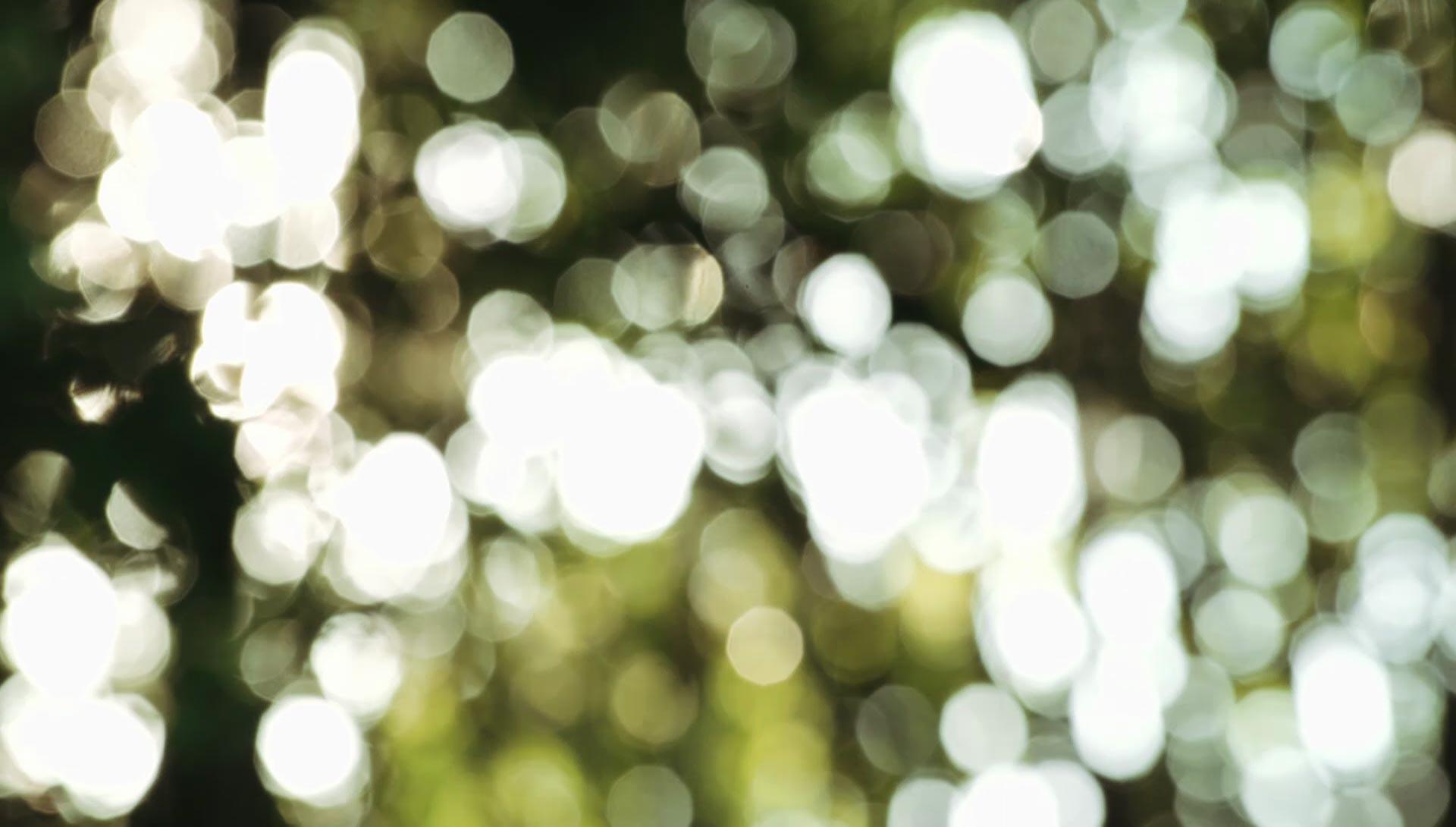 Dappled light seen through clumps of bamboo at Daruma ecovillage