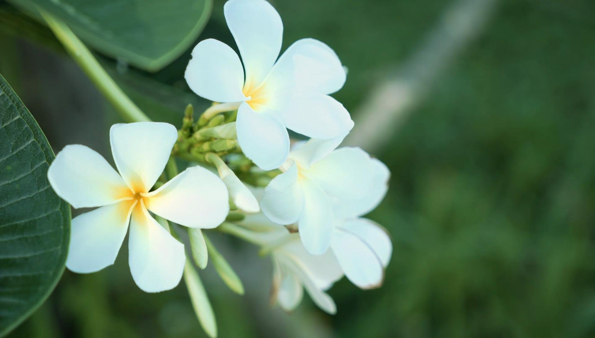 Flora at Daruma ecovillage