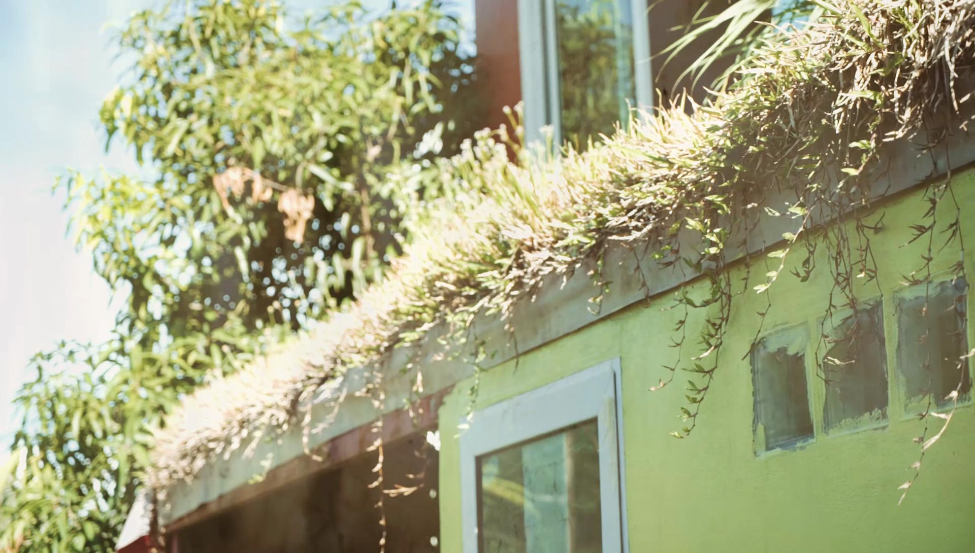 Green living roof at Daruma ecovillage. This is absolutely not a case of poor gutter maintenance. Honest!