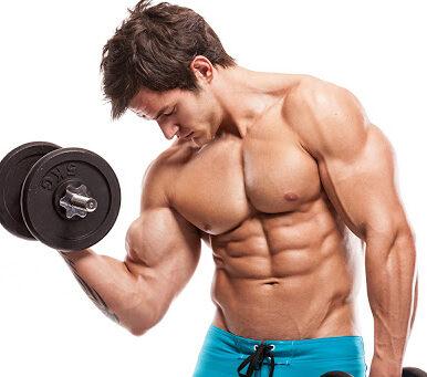 <span>Muscle</span> Gain