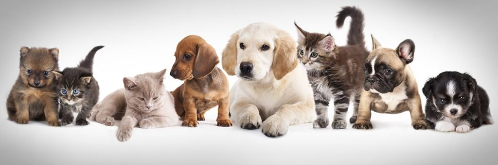 How Pets have become a huge part of our lives.
