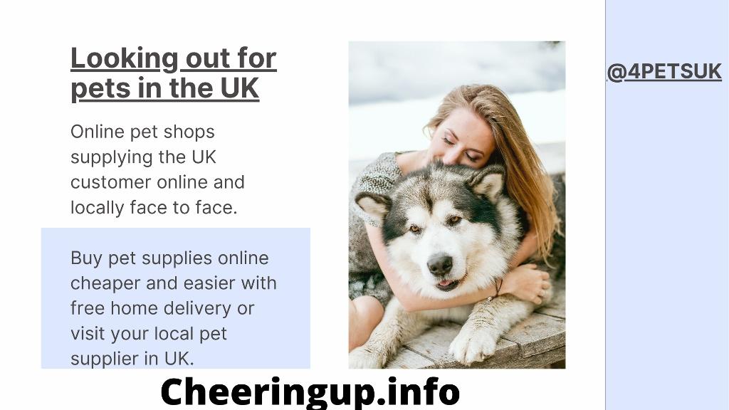 Online Pet Shops