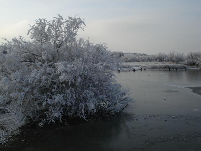 Wintery Lagoon