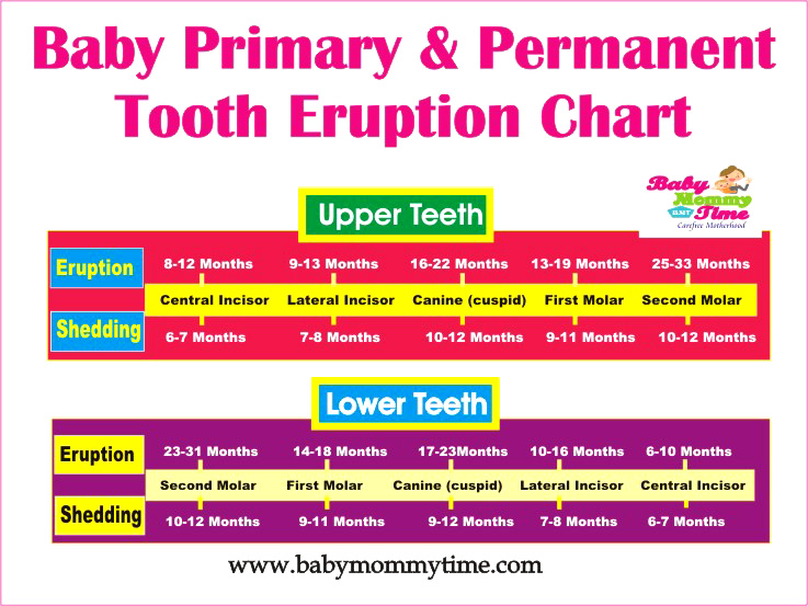 Baby Primary & Permanent Tooth Eruption Chart