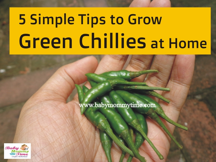5 Simple Tips to Grow Green Chillies at Home