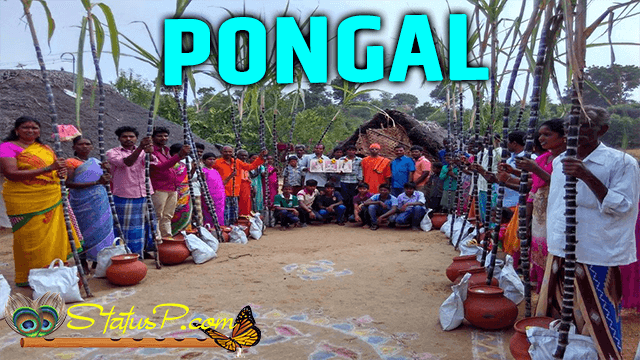 pongal-national-festivals-of-india
