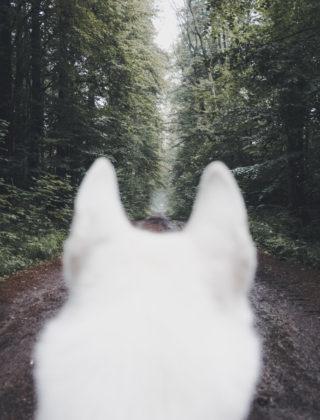 Η Κασσάνδρα και ο Λύκος