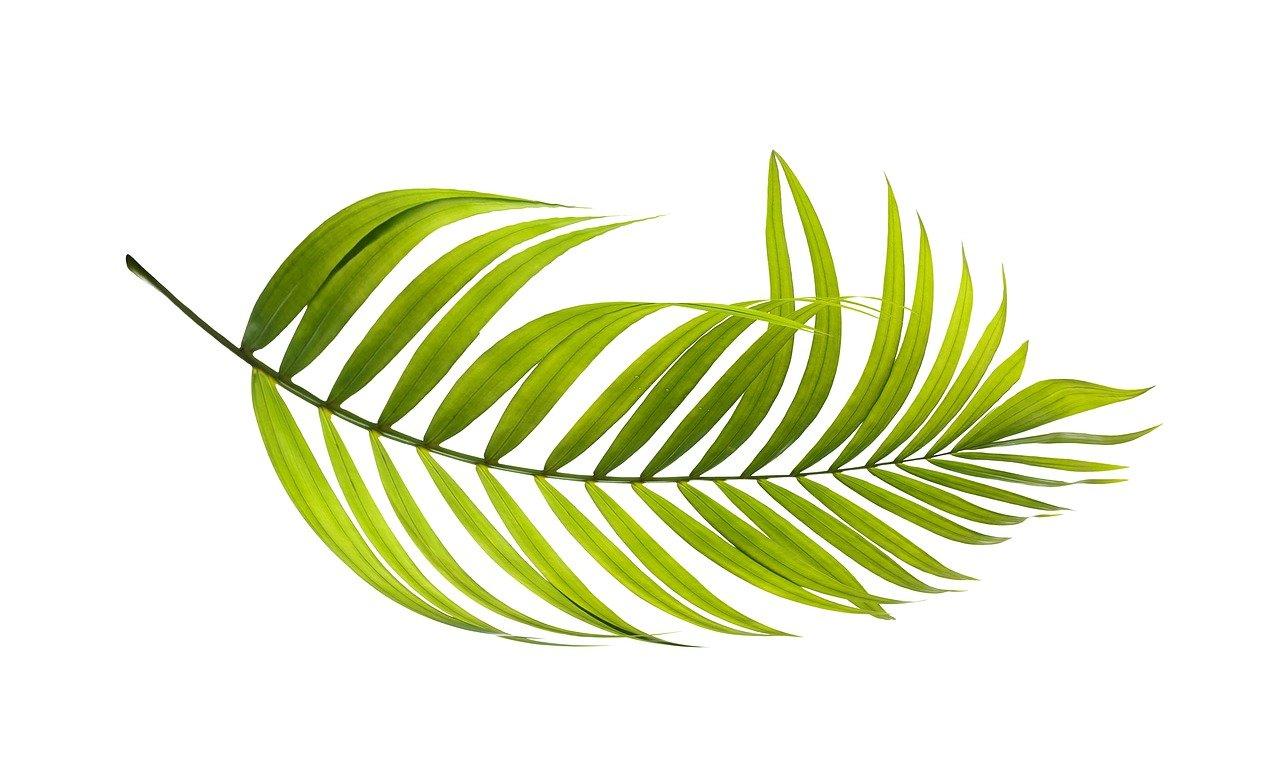 palm, leaf, green