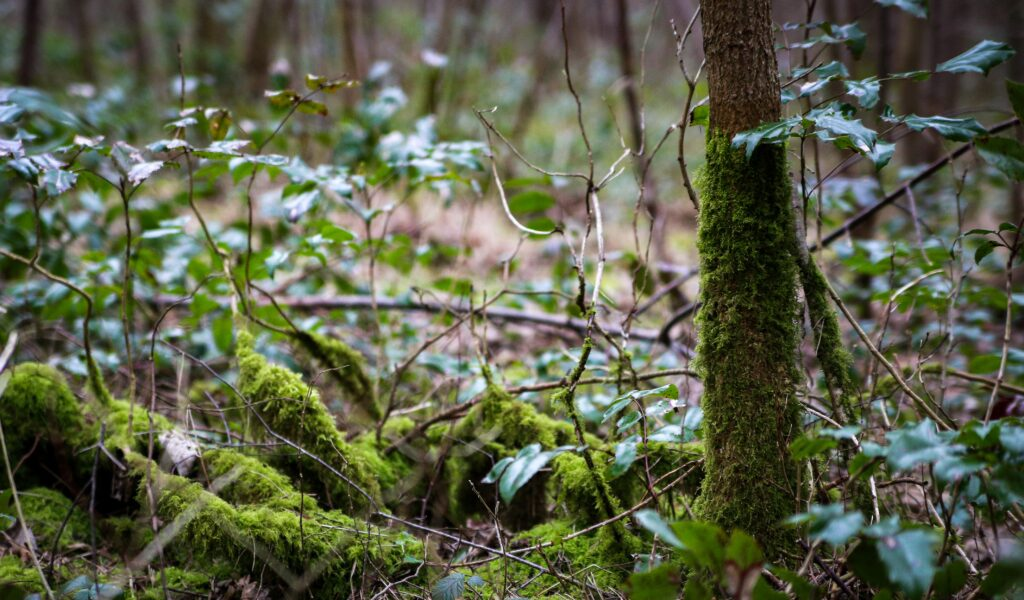 Moss in the woods
