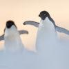 Trip report Antarctica 21.11-06.12 2014
