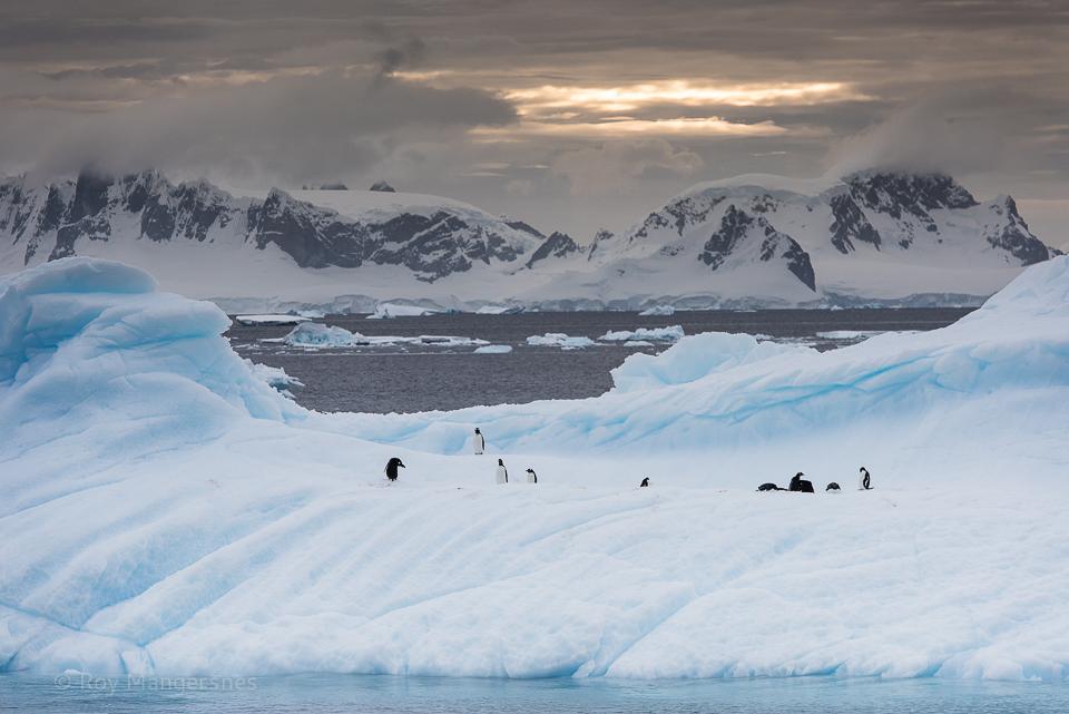 Penguins at sunset in the Gerlache Strait - D810, 70-200mm, 1/400 sec, f/8 @ ISO 400
