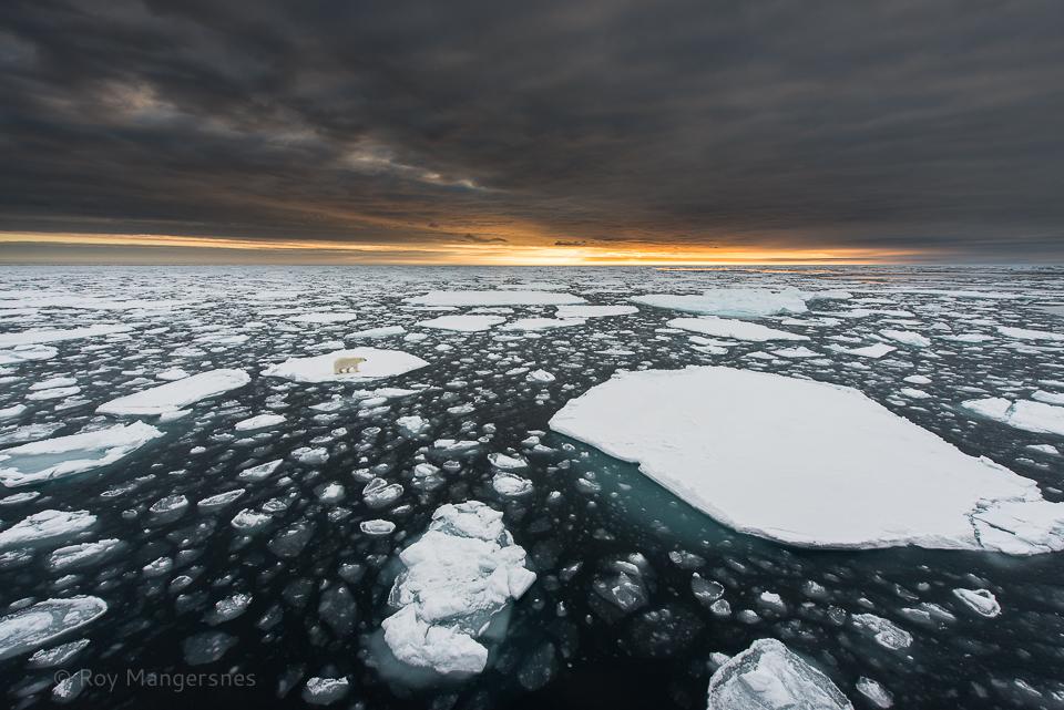 Polar bear at home at 83 degrees north - D800, 14-24mm, 1/320 sec, f/8 @ ISO 400