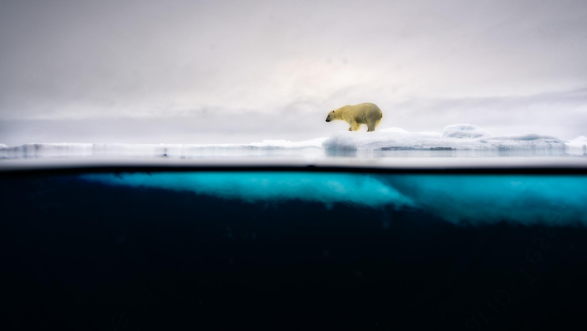 Copyright: Polar Bears & Humans project / Ole J Liodden