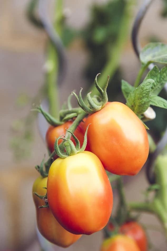 farming04-free-img-1.jpg