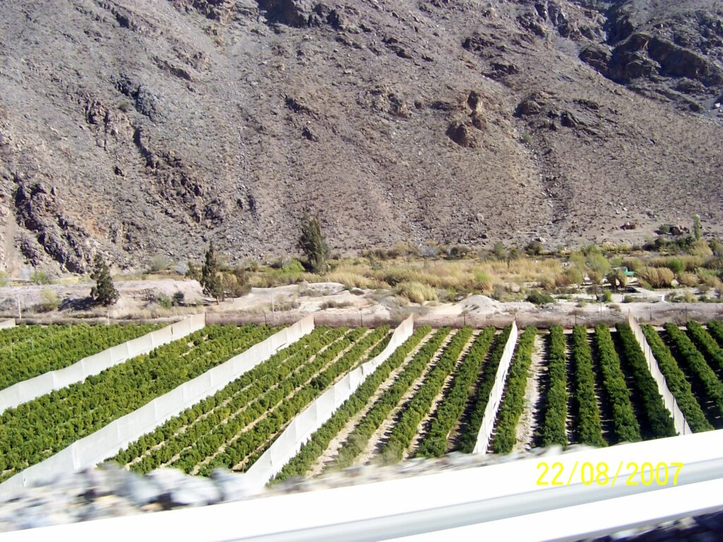 Elqui Valley crops | Spanish translation services for the food and tourism industry