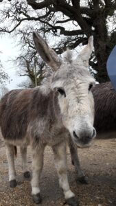 New-Forest-donkeys-Uk | tourism translation services