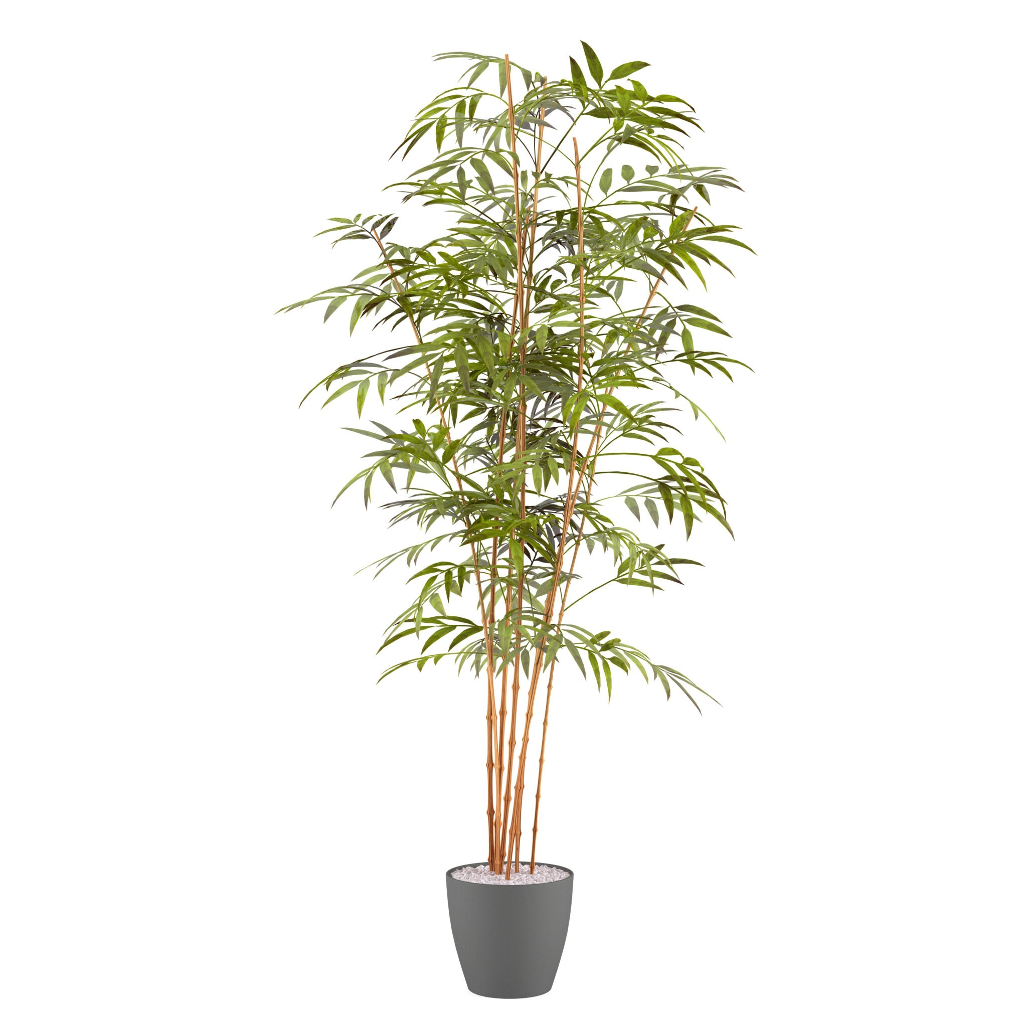 bamboo palm health benefits and air purification