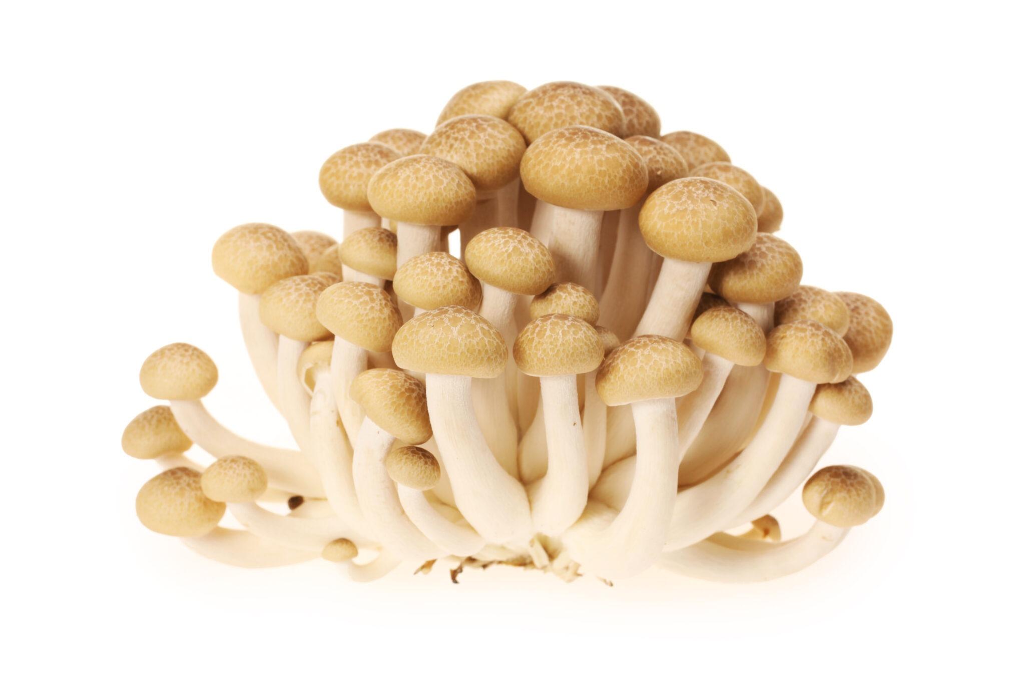 Shimeji mushroom: Health benefits and Side effects