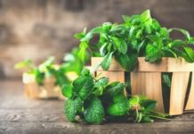 benefits of spearmint