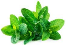 benefits of peppermint tea