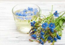 Chicory tea benefits