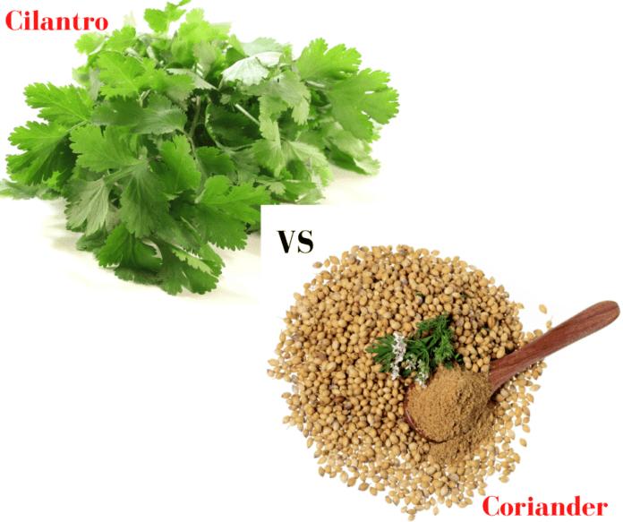 Cilantro vs Coriander