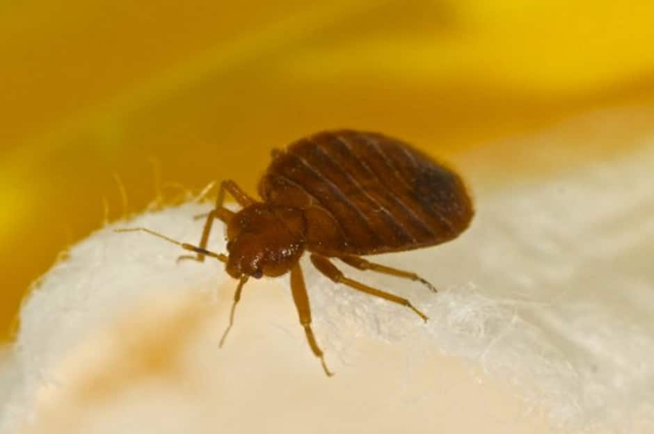 Bed Bugs Removal London Ontario