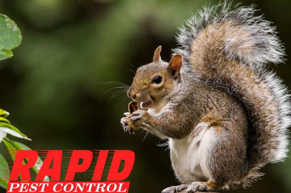 Squirrel Control London Ontario – Wildlife Removal London Ontario