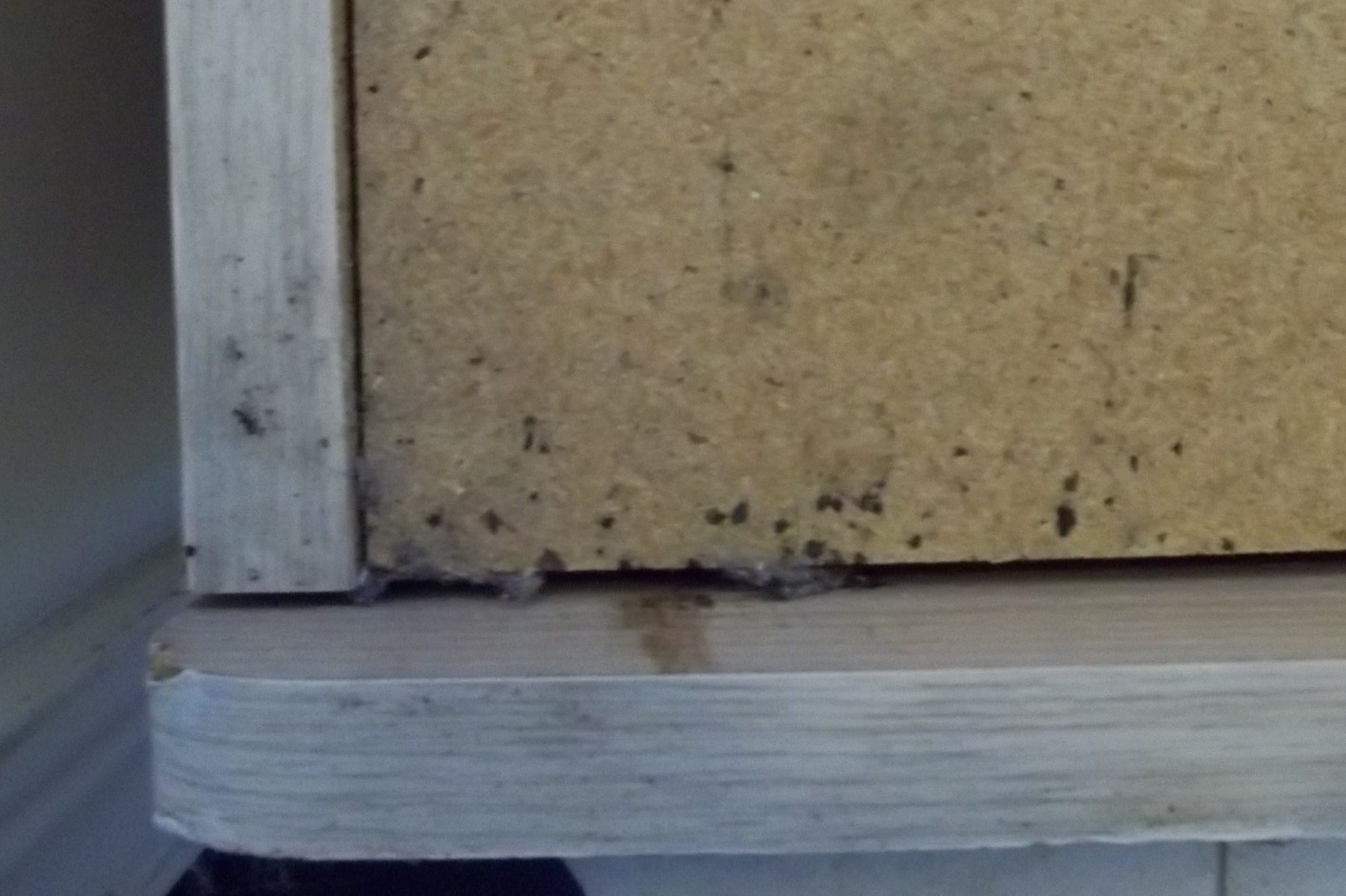 Bed Bug Elimination The Newest Detection Approaches