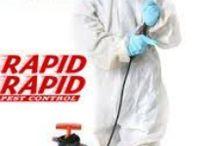 Benefits of Professional Pest Control London Ontario