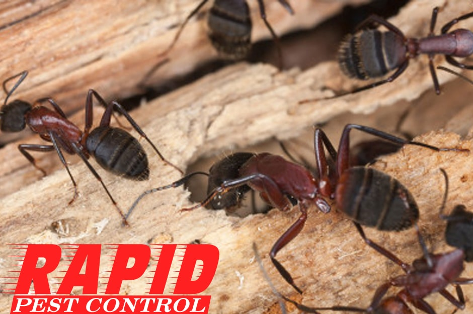 Pest Control Providers London Ontario