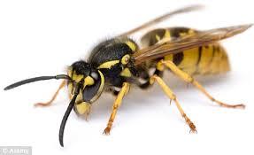 Hornets Sting Hard