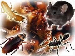 Picking The Best Pest management Professional