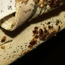 Your Horrible Reality Regarding Bedbug Bites